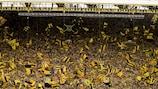 A famosa Parede Amarela formada pelos adeptos do  Dortmund nos jogos em casa